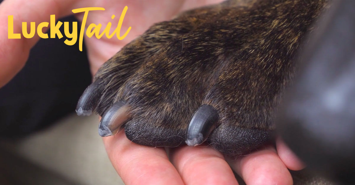 luckytail-blog-post-how-often-trim-dog-nails