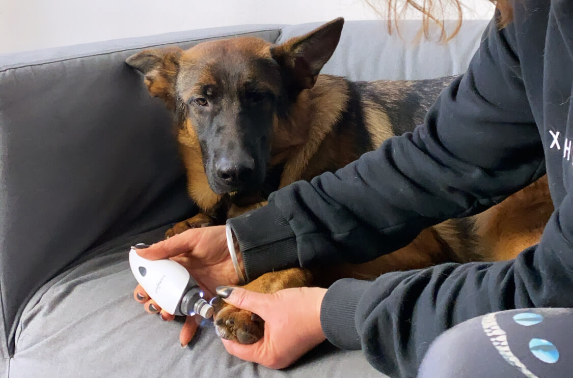 LuckyTail-how-properly-take-care-of-large-breed-dog-nails