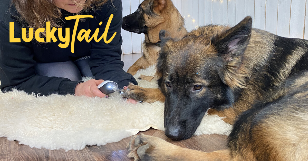 luckytail-blog-post_how_to_trim_large_dog_nails