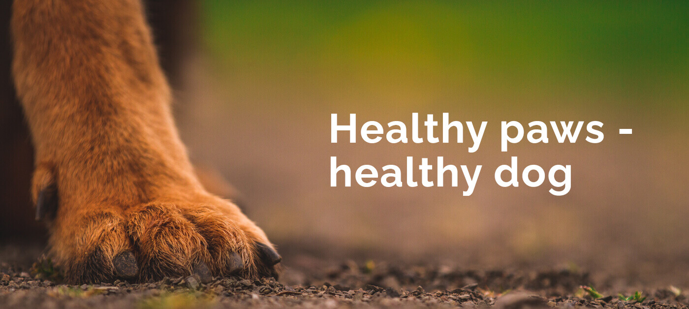 healthy_paws_healthy_dog_luckytail_best_dog_nail_grinder (1)